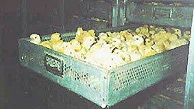 incubatation.jpg